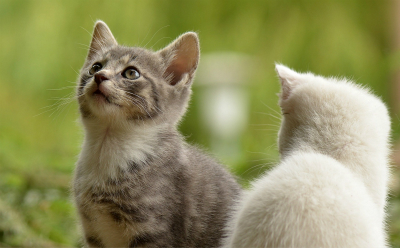 猫砂什么牌子好用还便宜
